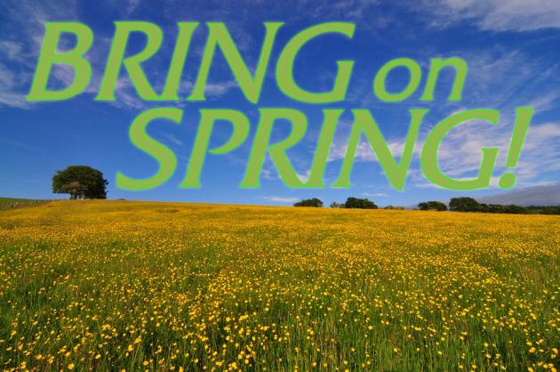 Buttercup-Springtime-Field-1812267